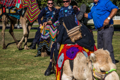Local Police on Camels