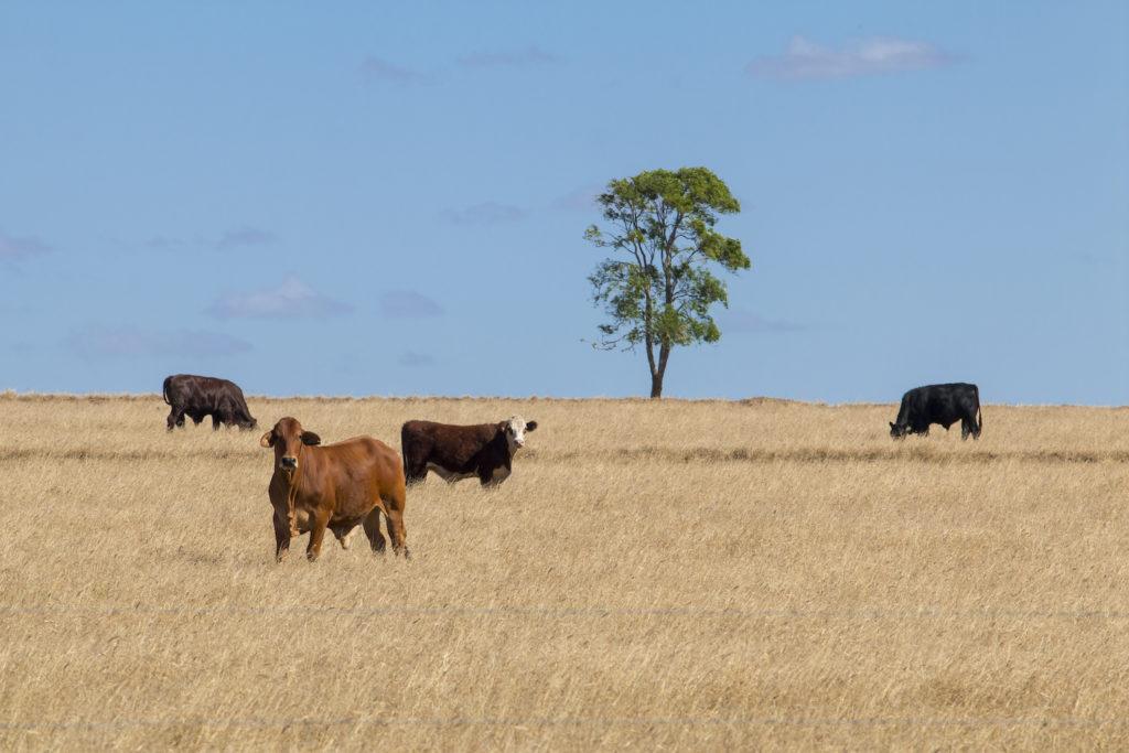 Tara Farm Tours - Image by WDRC