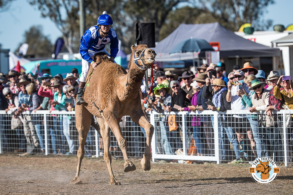 TC919967-Sporting the racing colours of the famous mare, Jockey Troy Richardson couldn't quite get a 'Winx' performance from his camel 'Blinx'